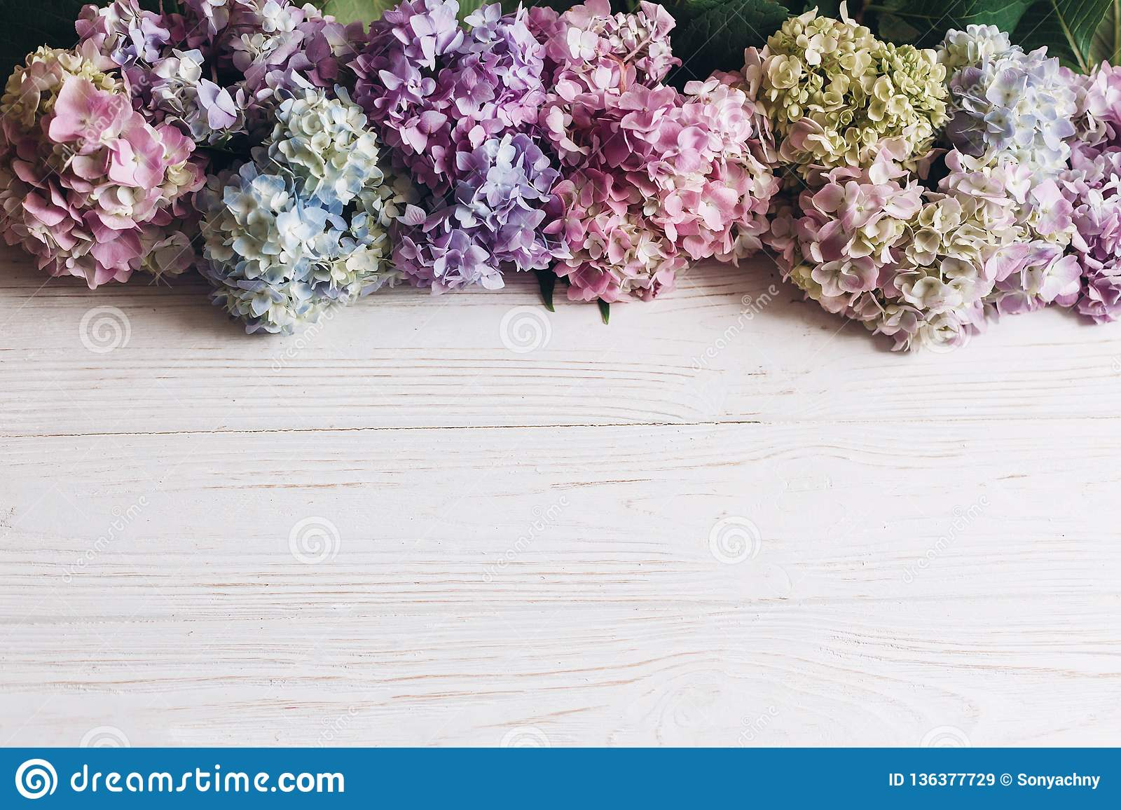 Hello spring. Happy mothers day. Women day. Beautiful hydrangea flowers on rustic white wood, flat lay. Colorful pink,blue,green,