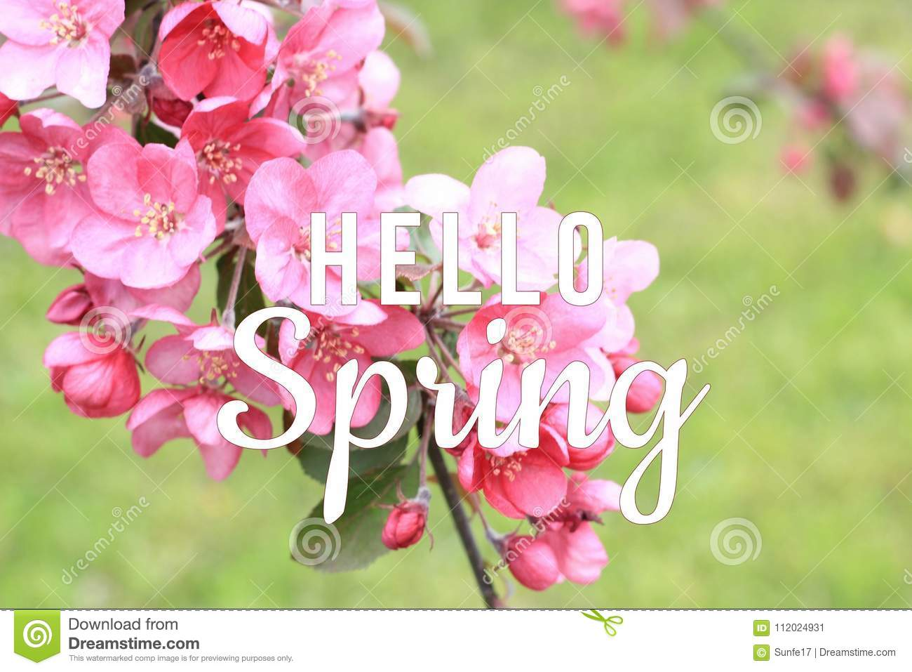 Hello Spring text on blooming tree branch background