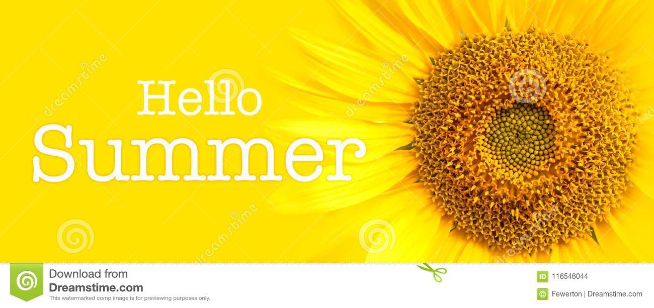 Hello Summer text and sunflower close-up details in yellow banner background