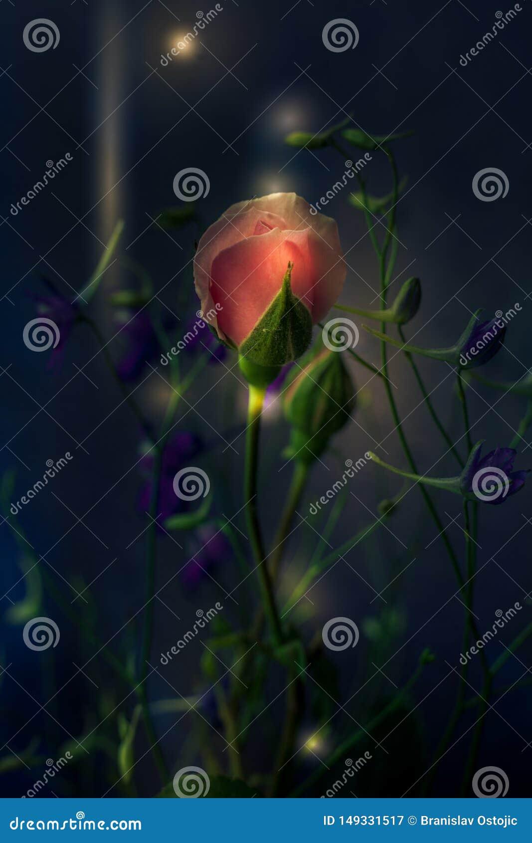 Hellrosa Rose der Fantasie und wilde Blumen auf dunklem Hintergrundmakro
