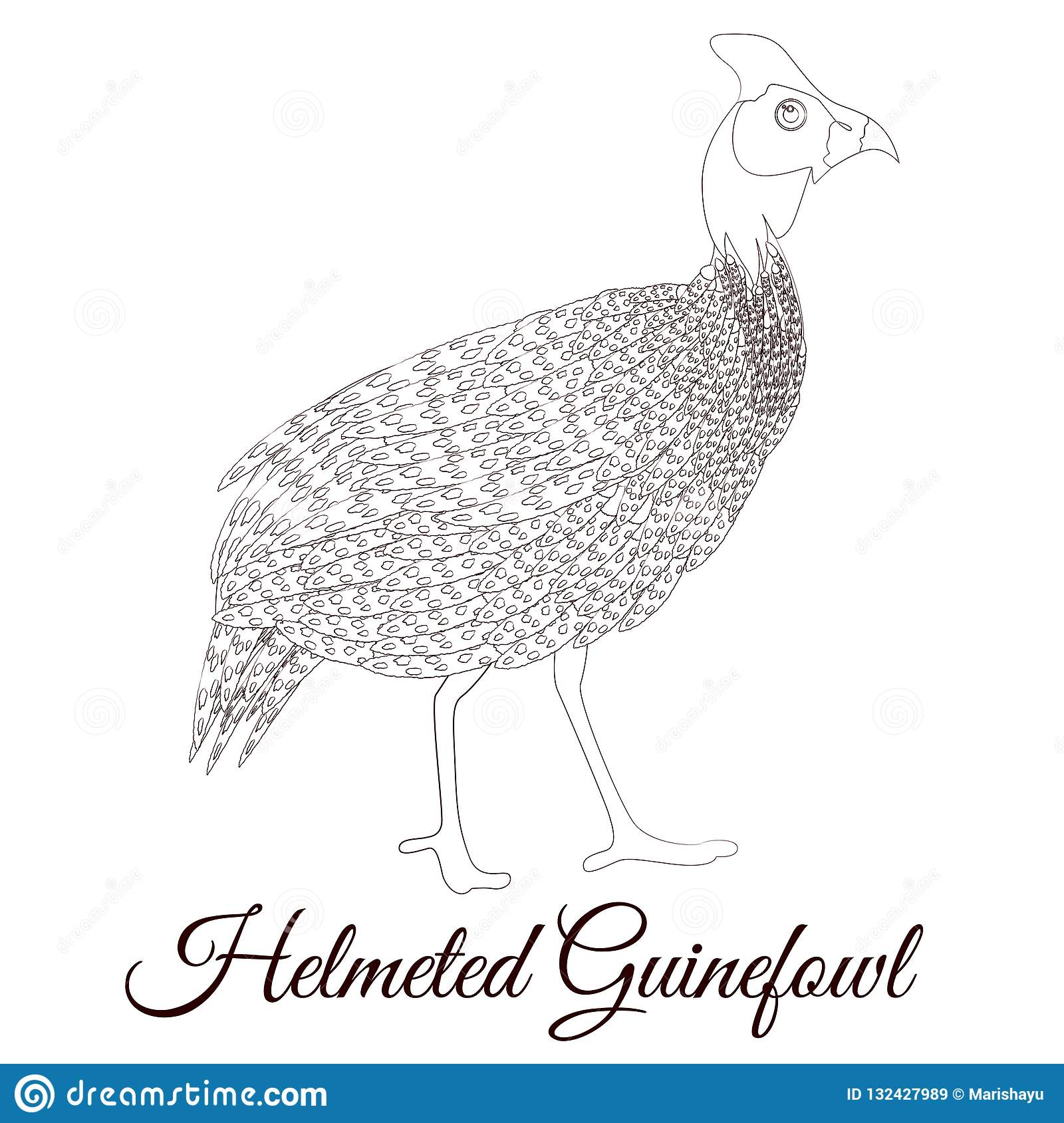 Helmeted Guineafowl Bird Coloring Stock Vector Illustration Of