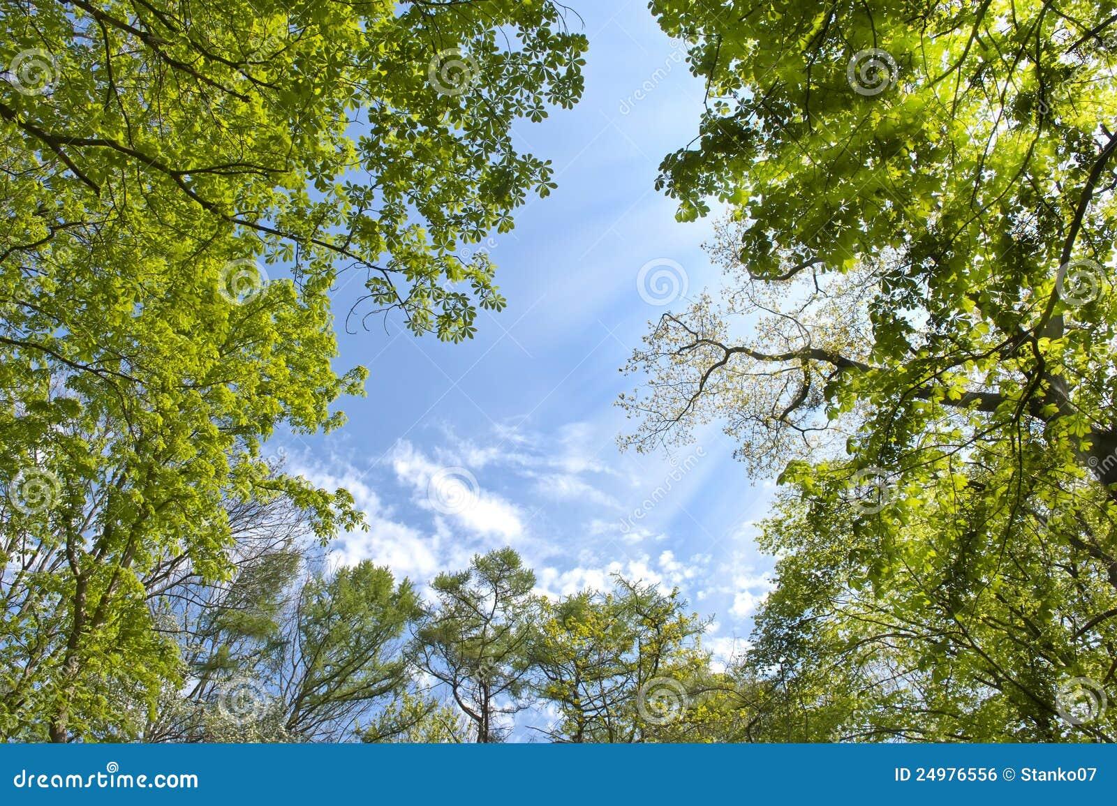 Hemel in het bos