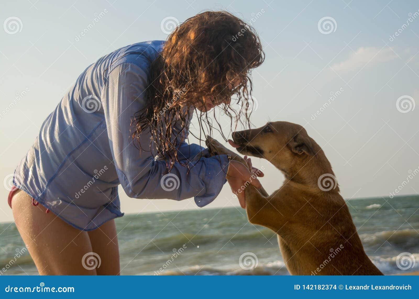 Hemlös hund för härlig smekning för ung kvinna på stranden