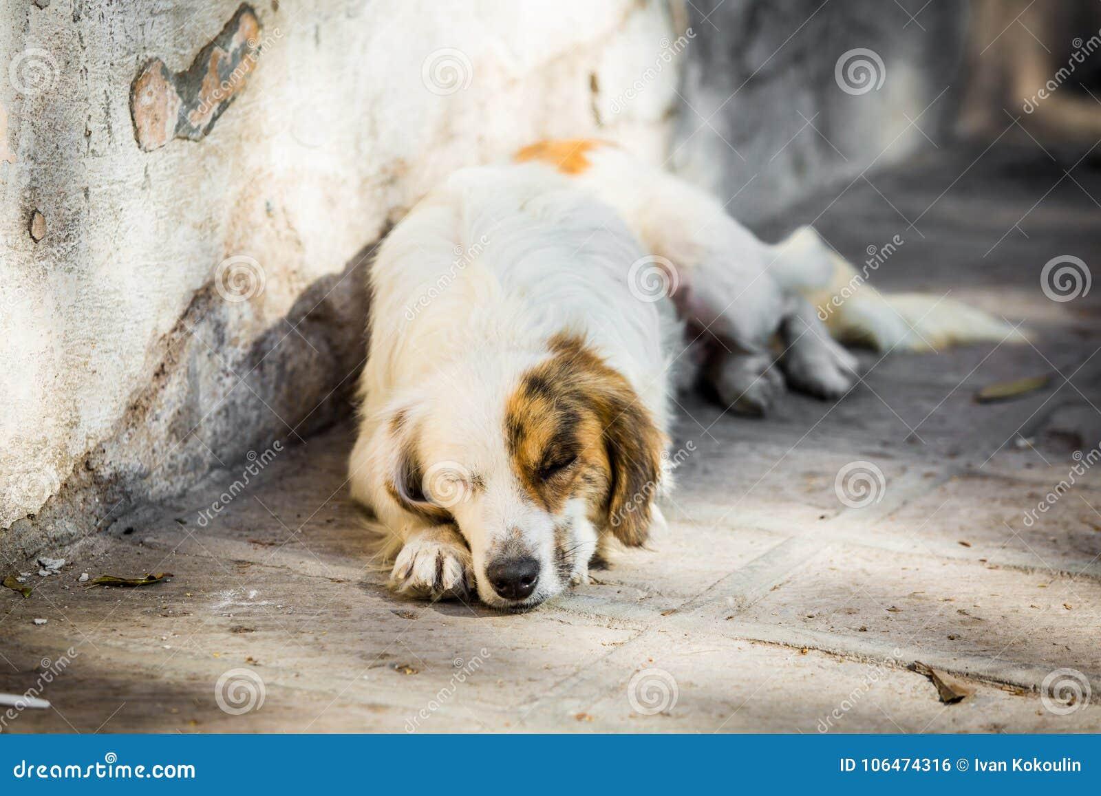 Hemlös hund på gatan