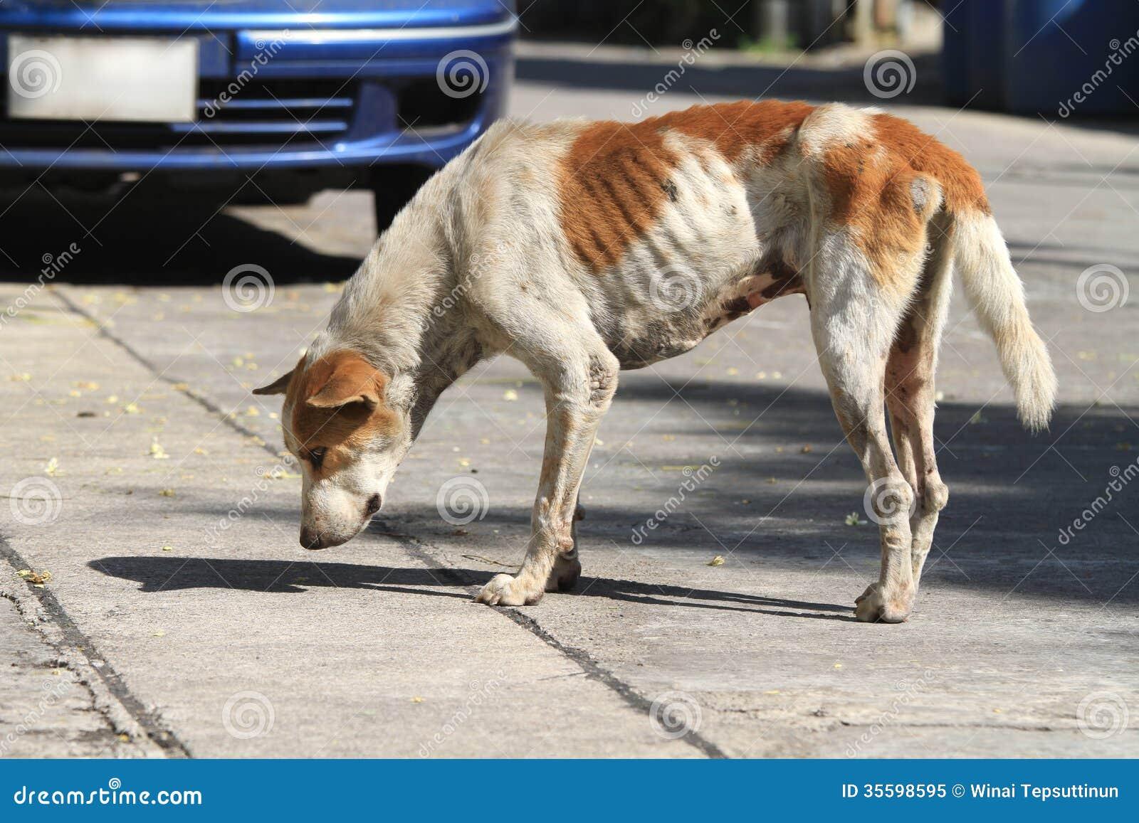 Hemlös hund på vägen