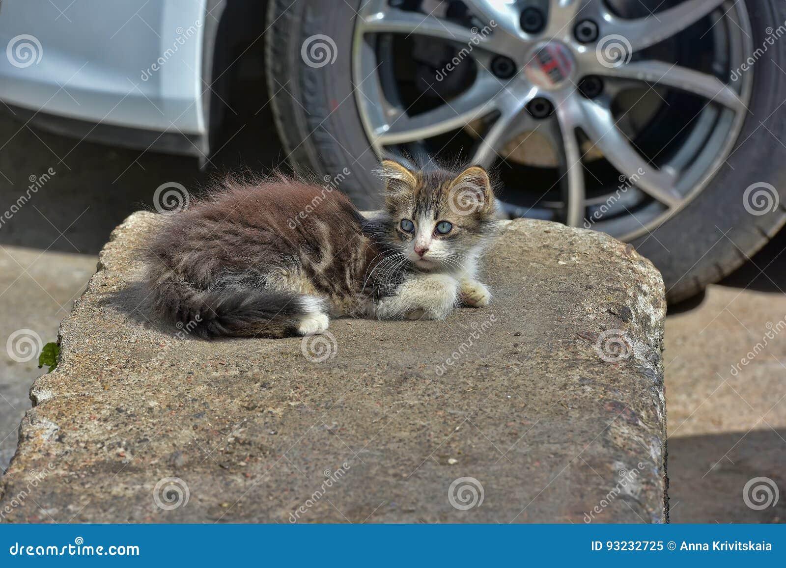 Hemlös kattunge