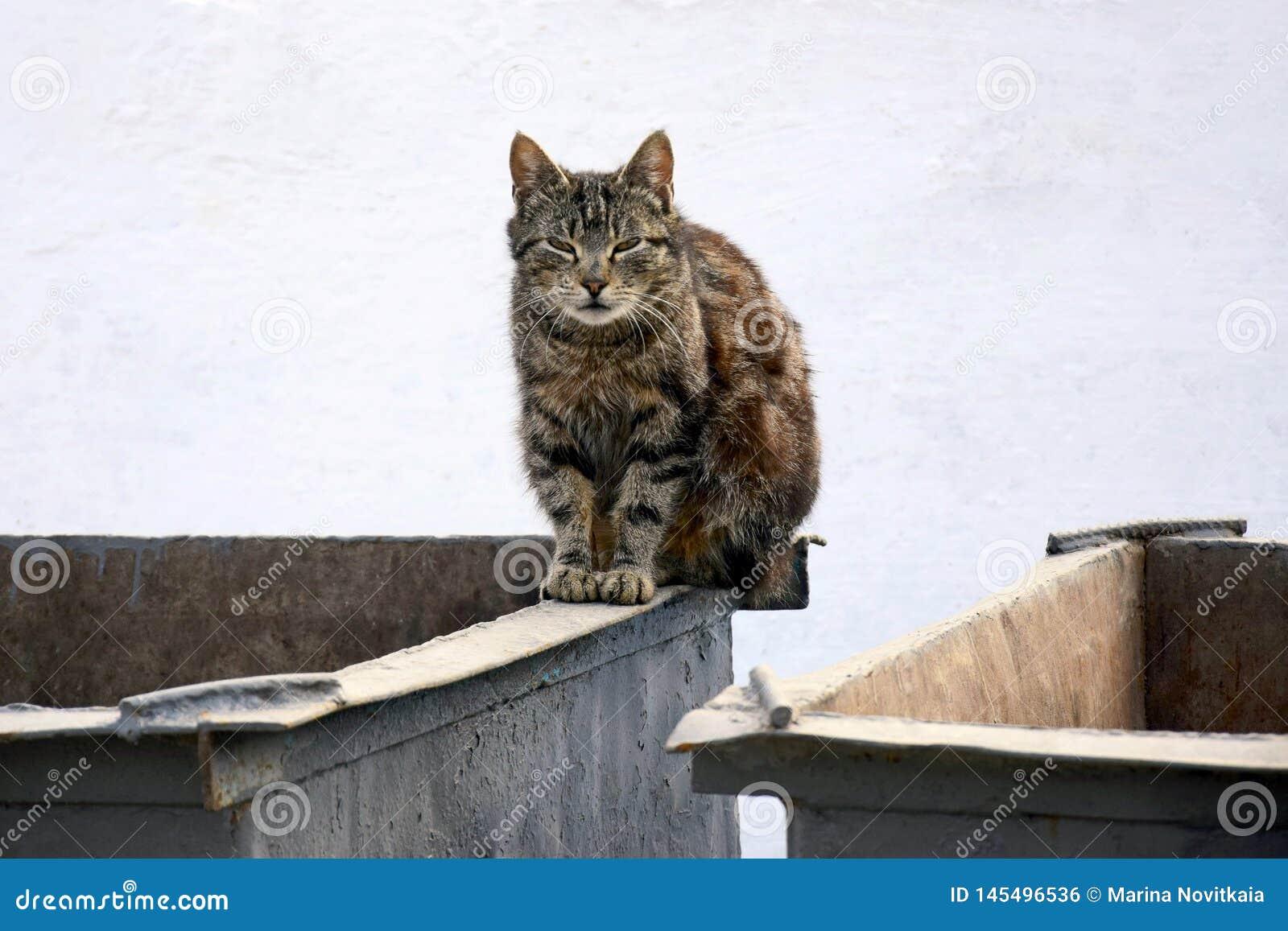 Heml?s katt p? avskr?debeh?llaren