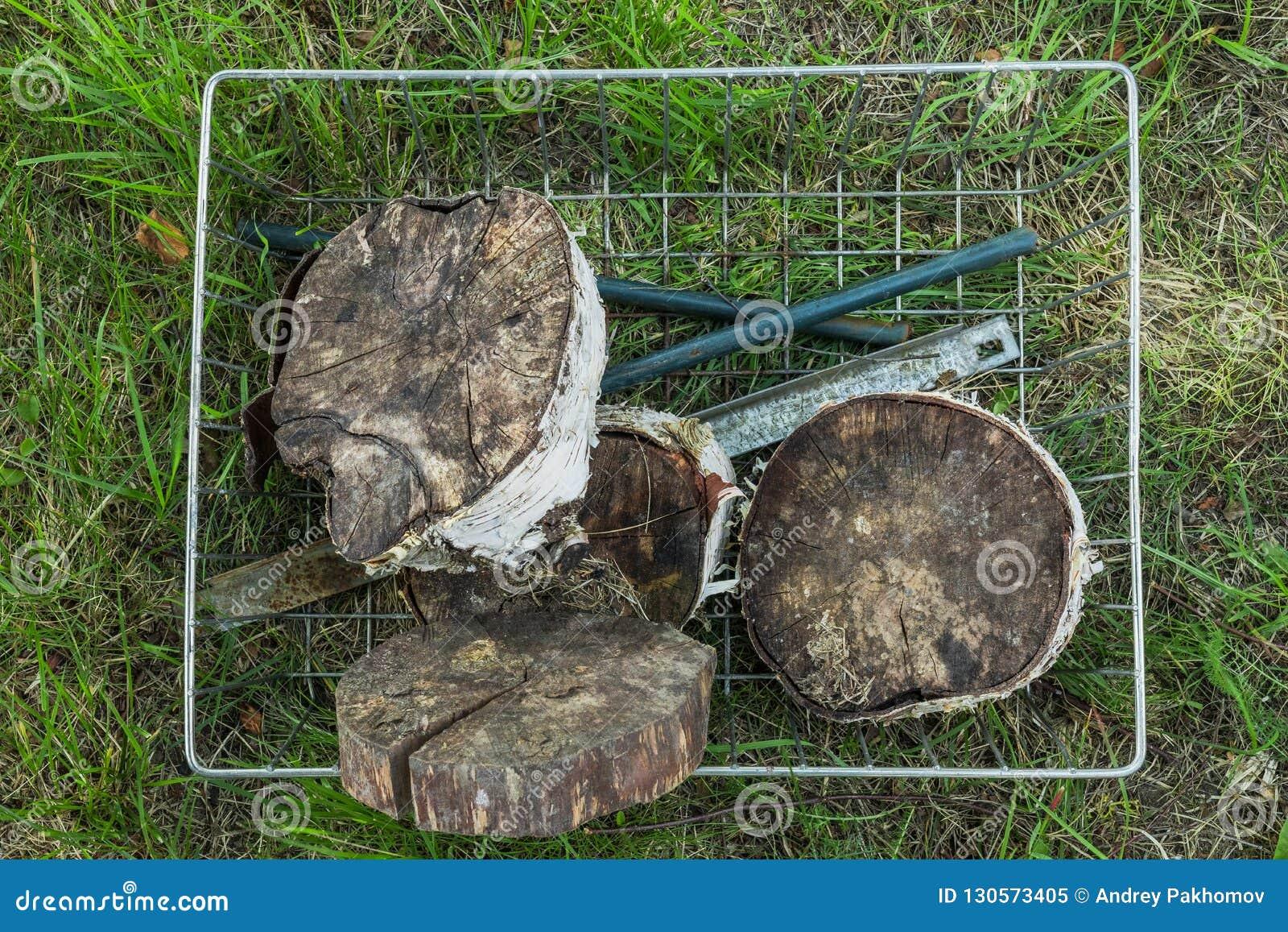 Hemp cut wood. Autumn forest.