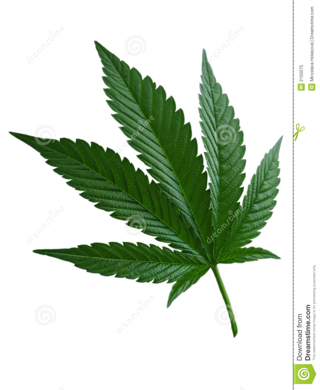 Hemp Leaf Royalty Free Stock Photo Image 2150075