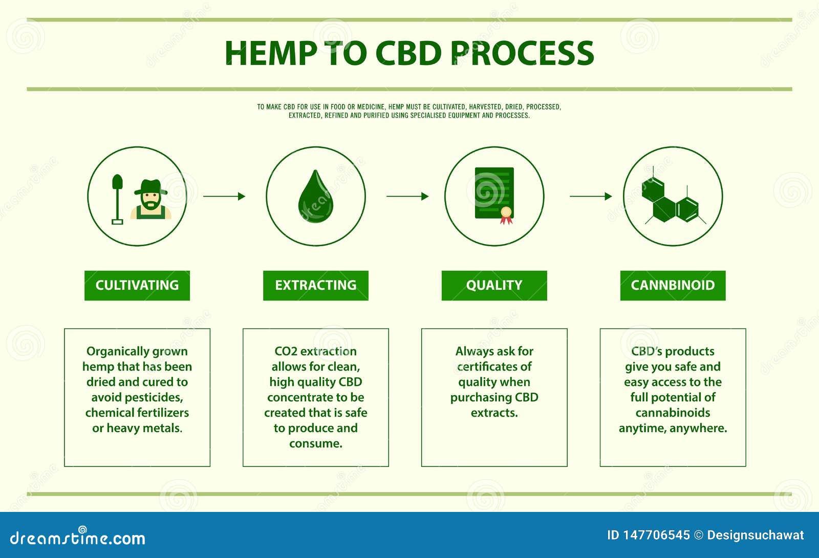 Hemp To CBD Process Horizontal Infographic Stock
