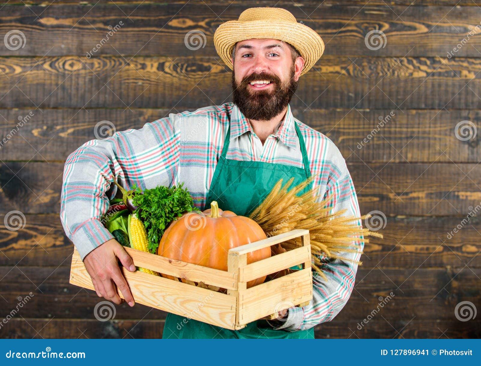 Hemsändning för nya grönsaker Ny organisk grönsakask Hatten för bondehipstersugrör levererar nya grönsaker man