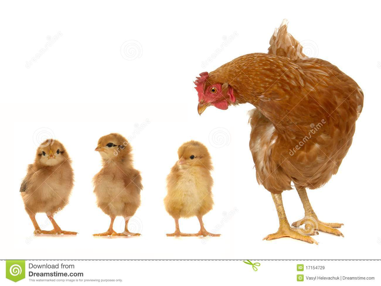 Hen And Chicks Royalty Free Stock Images - Image: 17154729