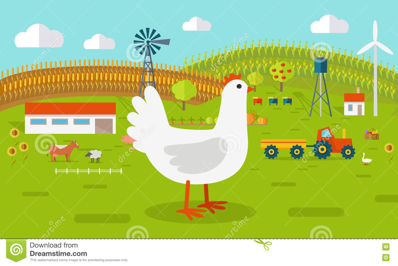 Writing a Business Plan for Chicken Farming