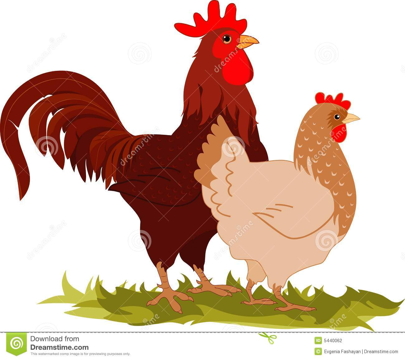 Cartoon vectorial illustration of a hen and a rooster.