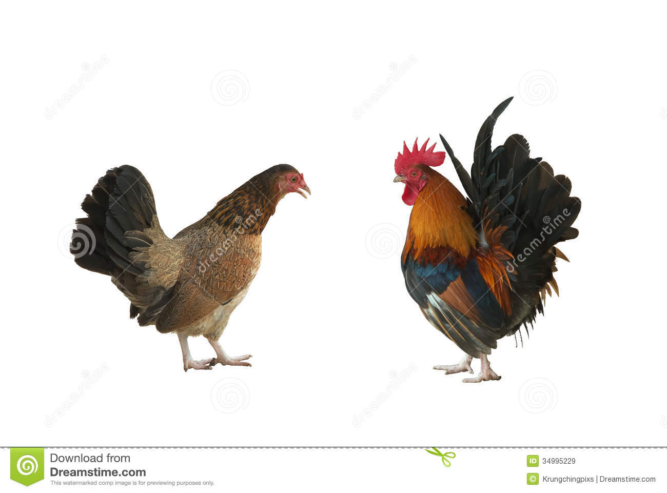 Hen And Rooster Royalty Free Stock Images - Image: 34995229