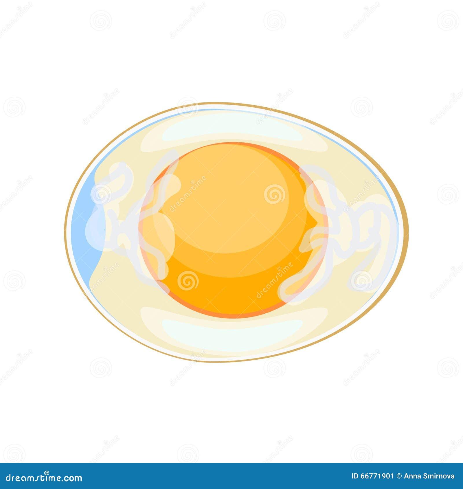 Hen's Egg In Cross Section Stock Illustration - Image: 66771901