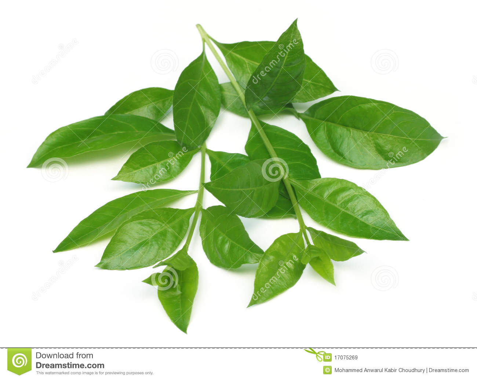 Henna φύλλα