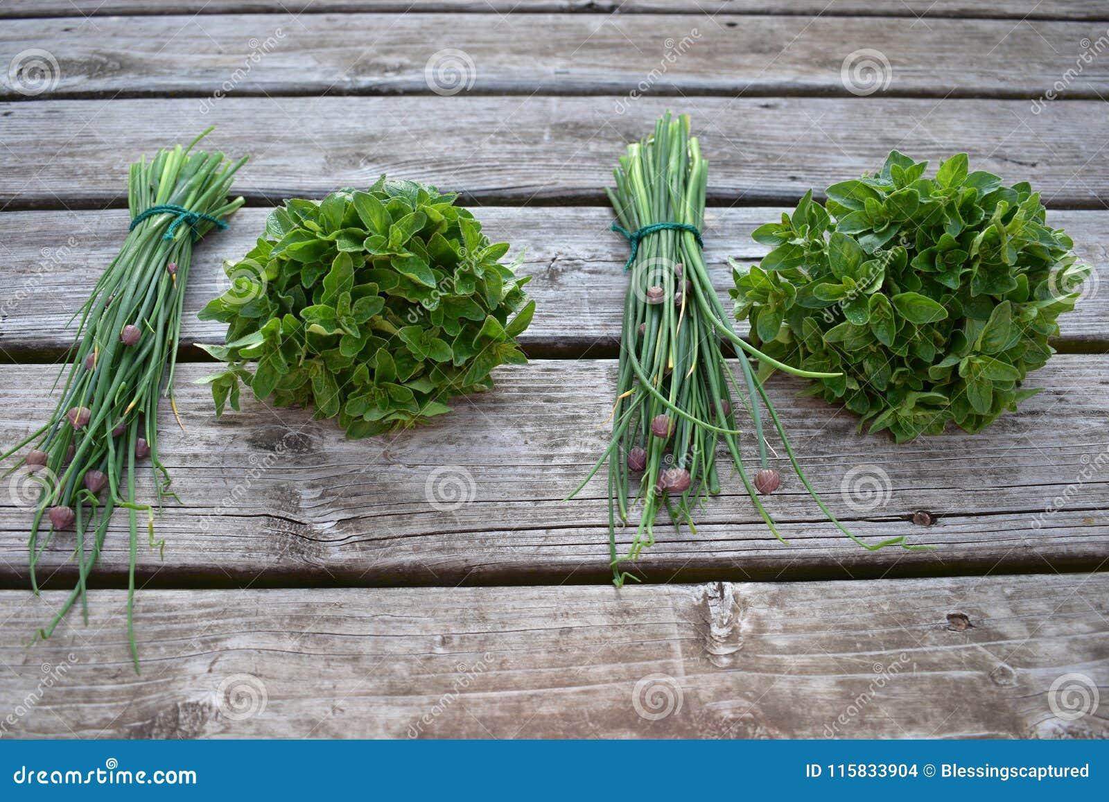 Herb bundles, chive and oregano