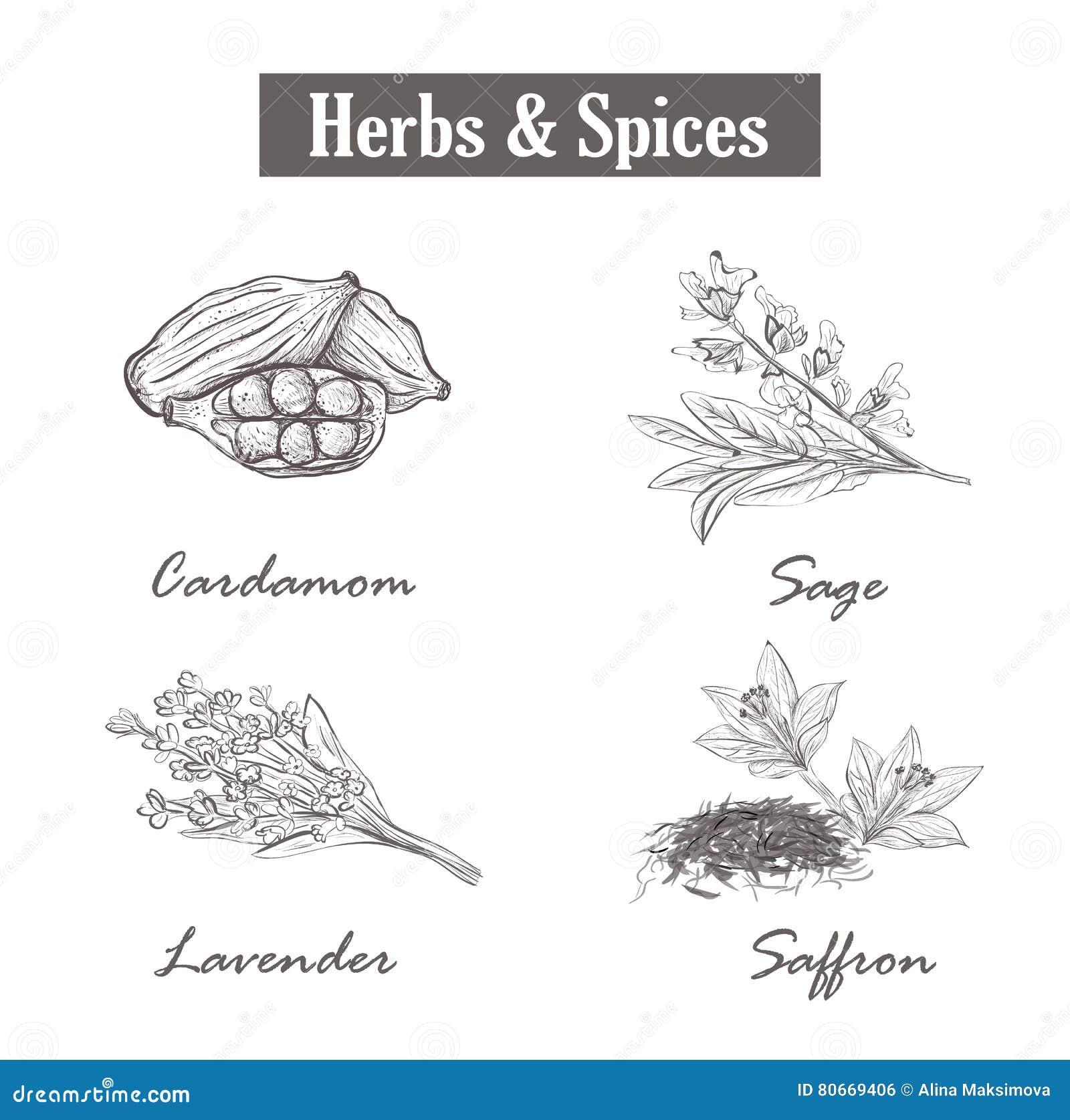 Herb czosnków bay kardamonowi liści pieprzowe spice waniliowe rosemary soli szafran, mędrzec, lawenda, kardamon