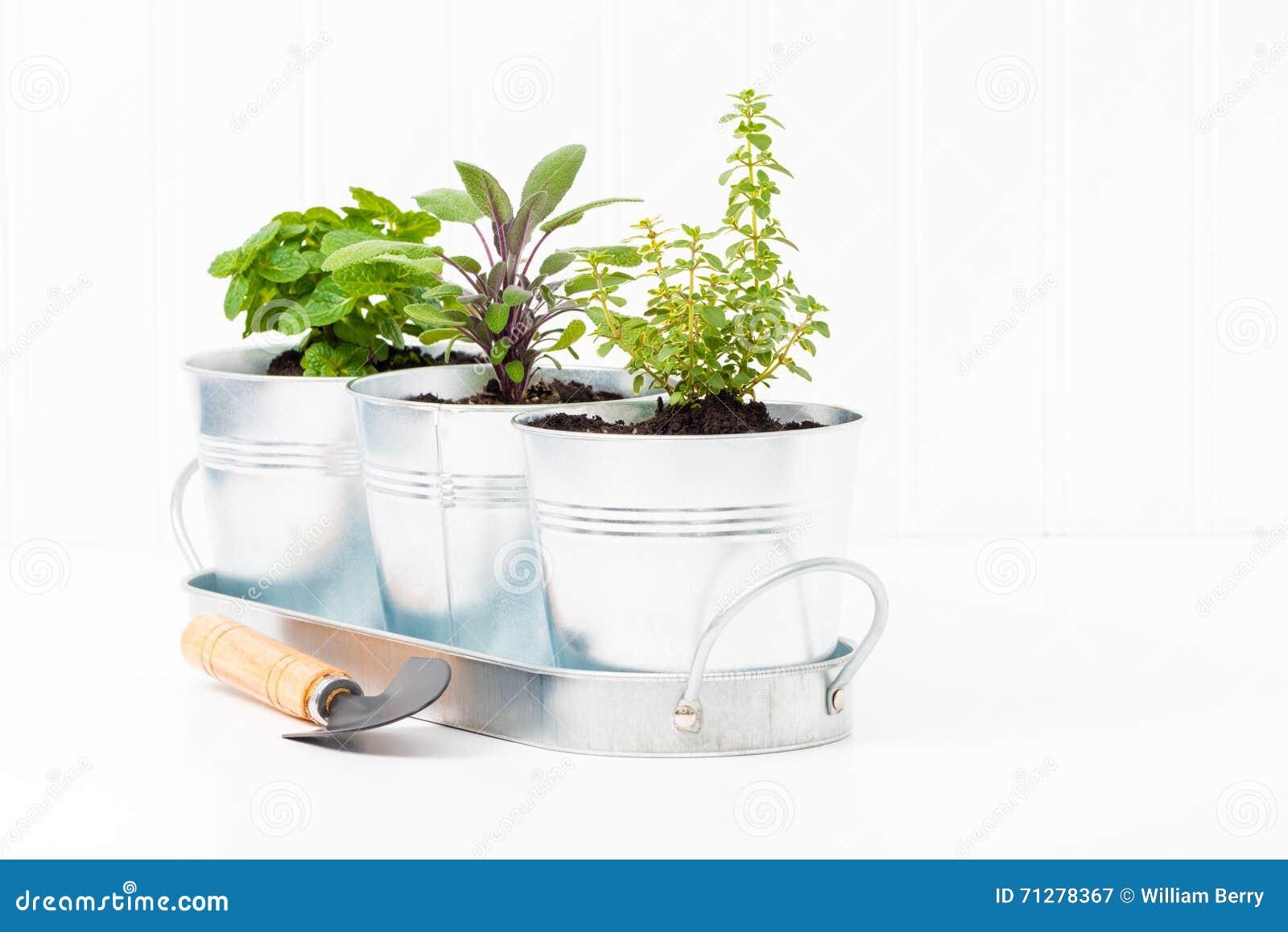 Herbes Aromatiques D Intérieur herb garden d'intérieur image stock. image du