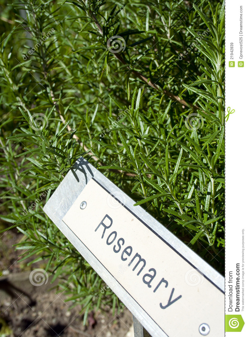 herb garden signs with herbs royalty free stock images image