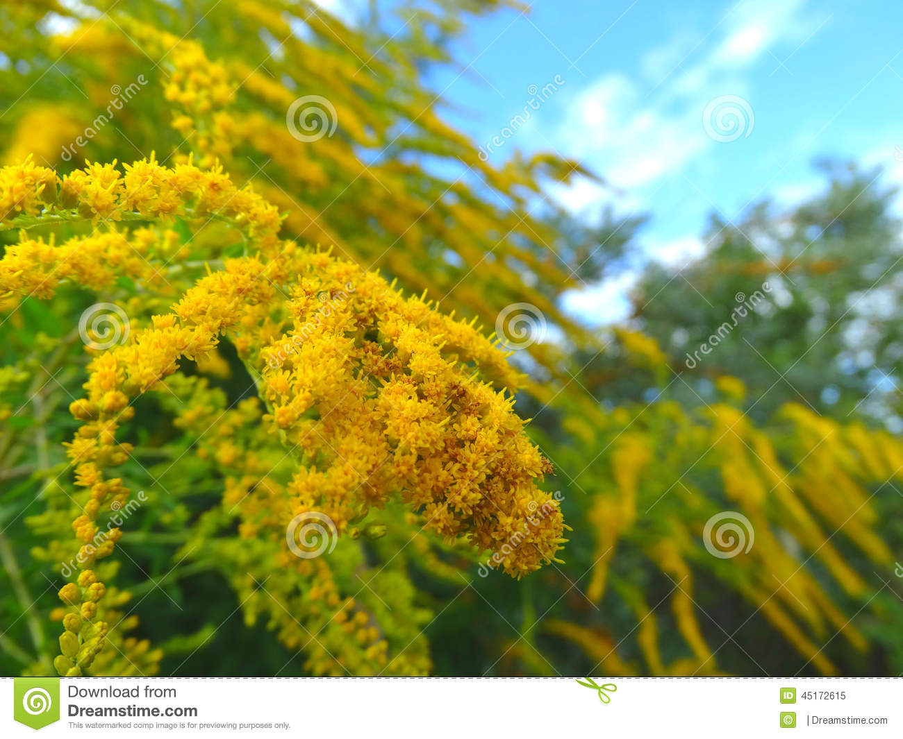 Herb Stock Image Image Of Plants Herb 45172615