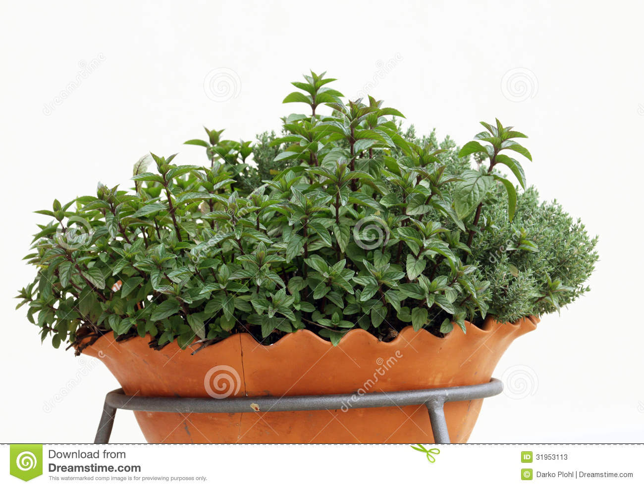 Herb Plants In To The Pot On The Balcony Stock Image
