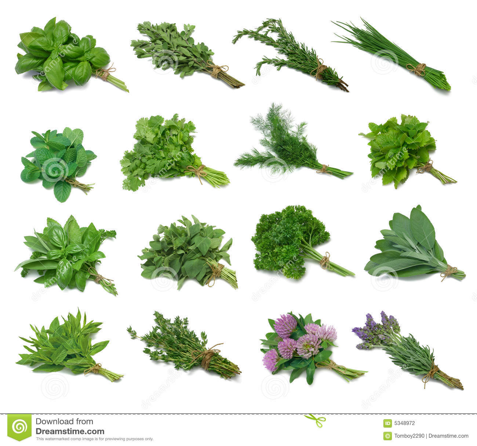 Herb próbnika