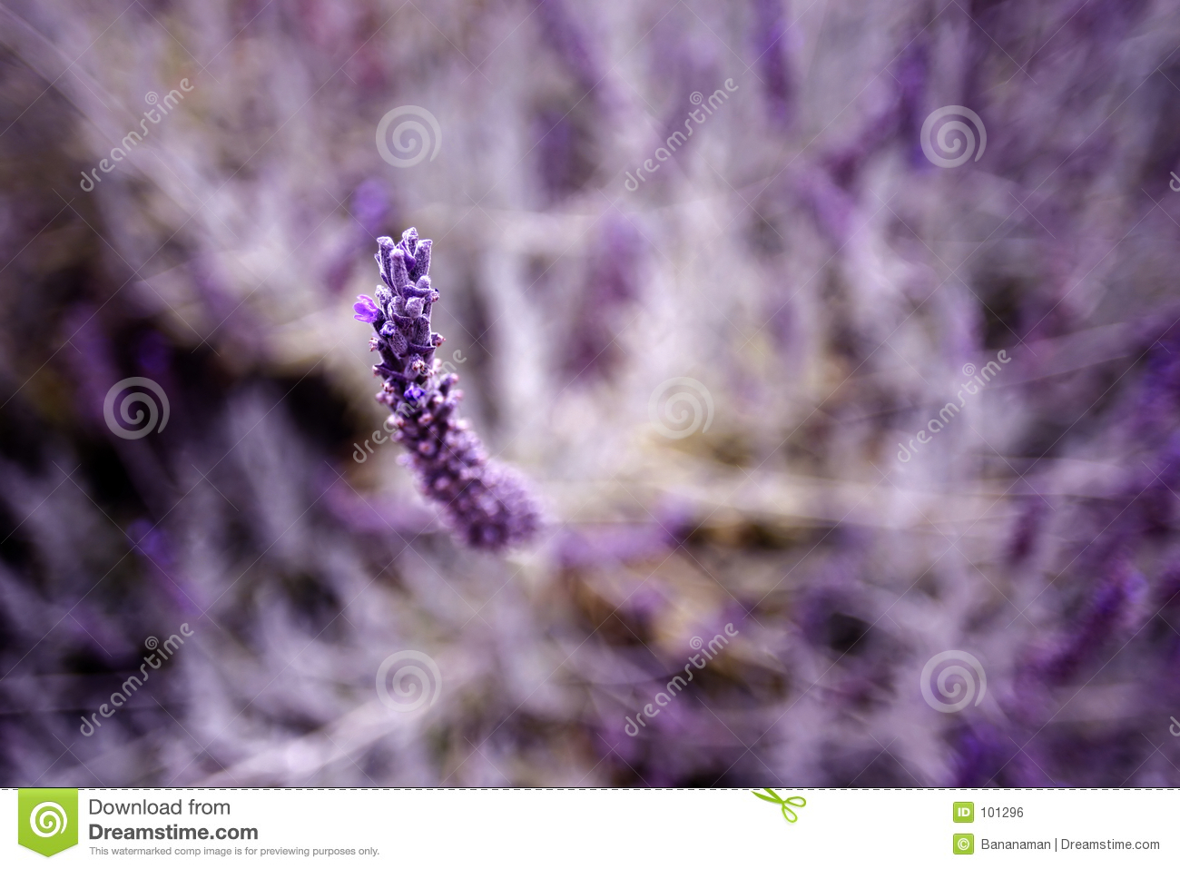 Download Herb purple stock photo. Image of herb, summer, planting - 101296