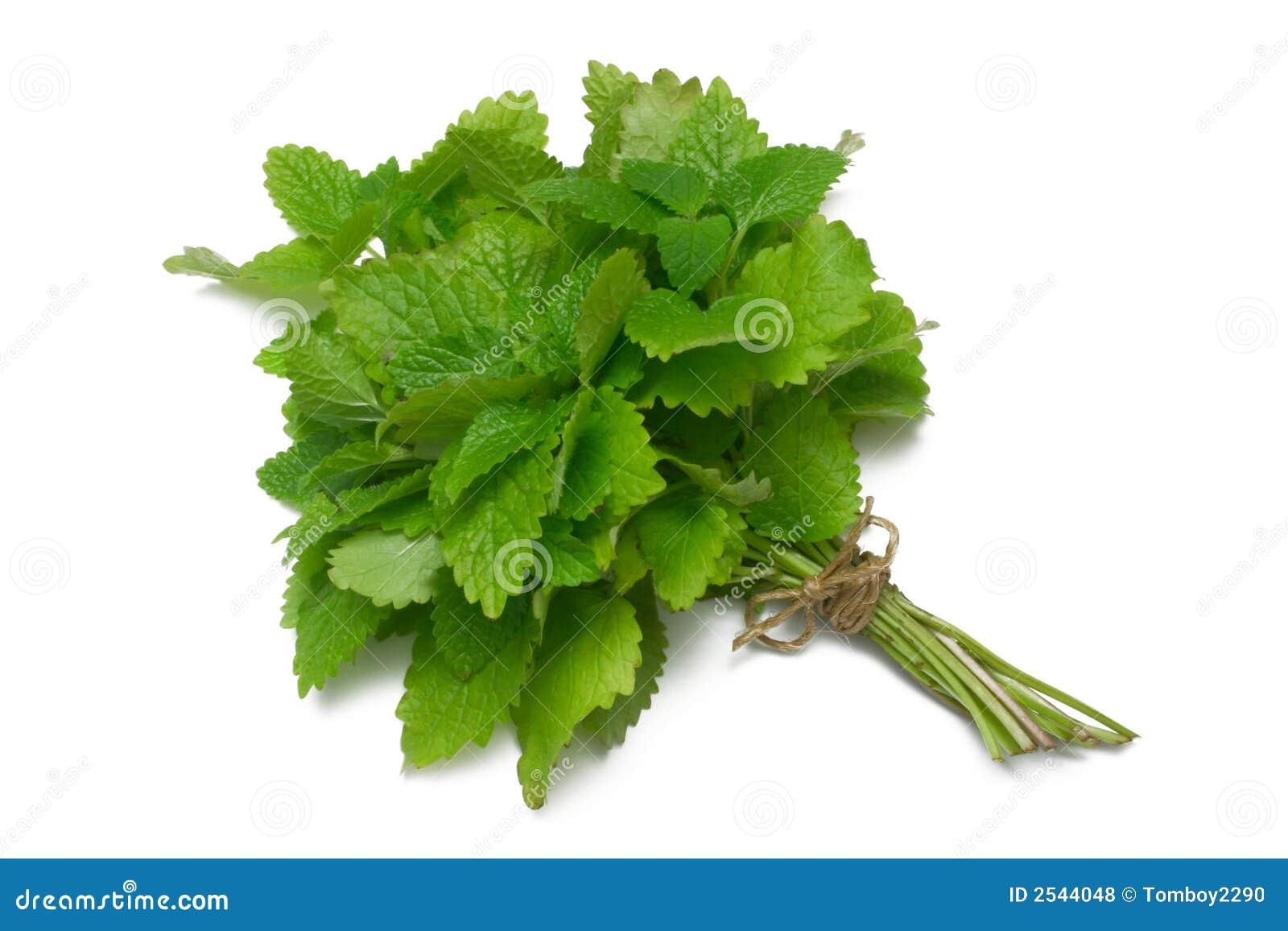 Herb Series Lemon Balm