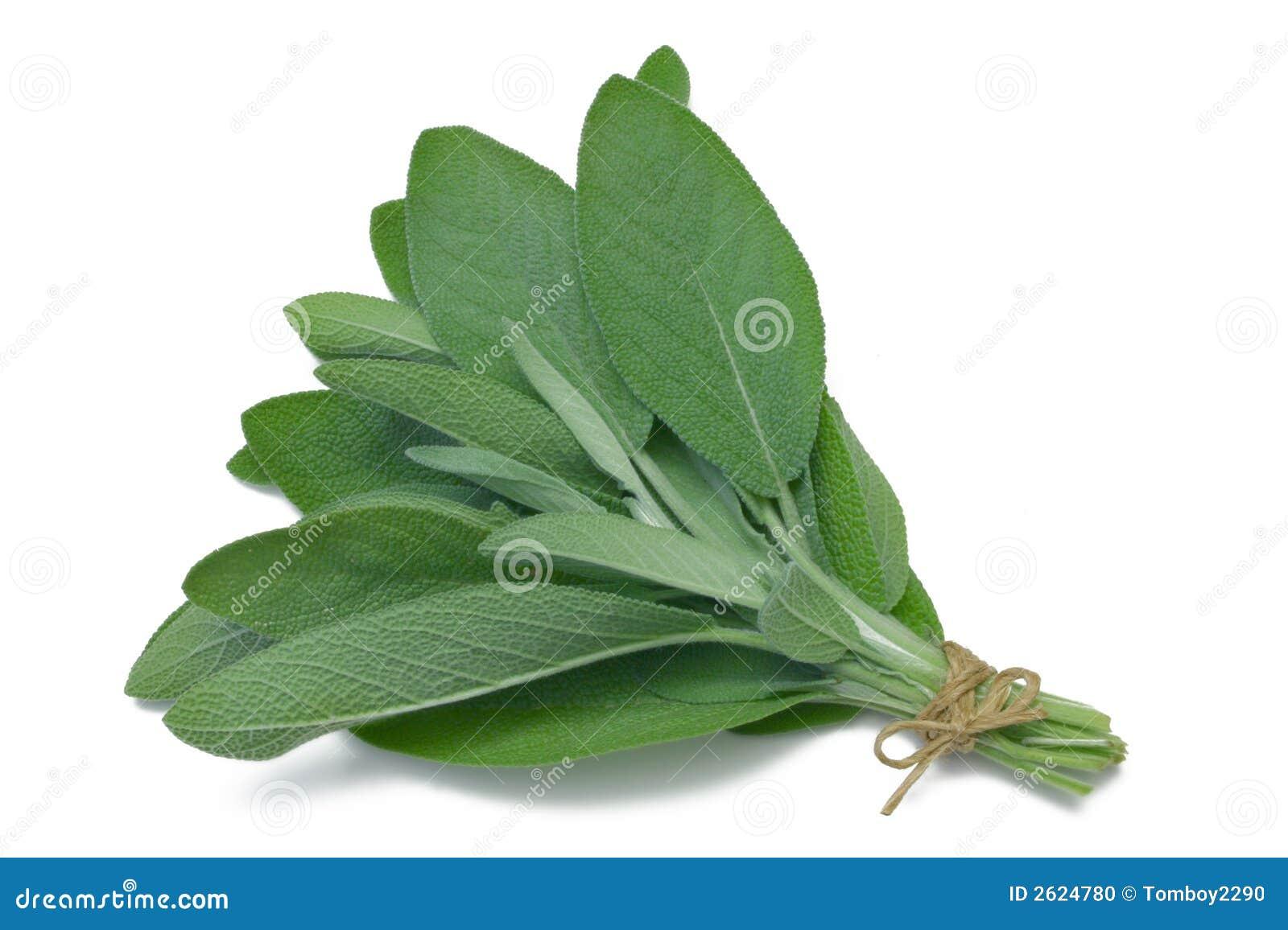 Herb Series Sage