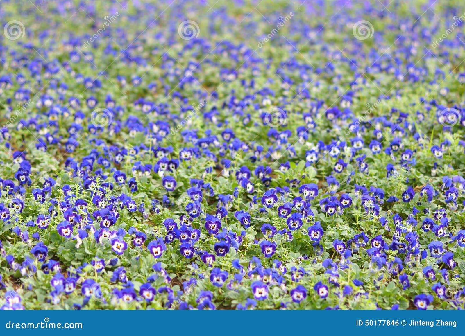 Herb trinity stock photo image of blue flowers small 50177846 image of blue flowers small 50177846 izmirmasajfo