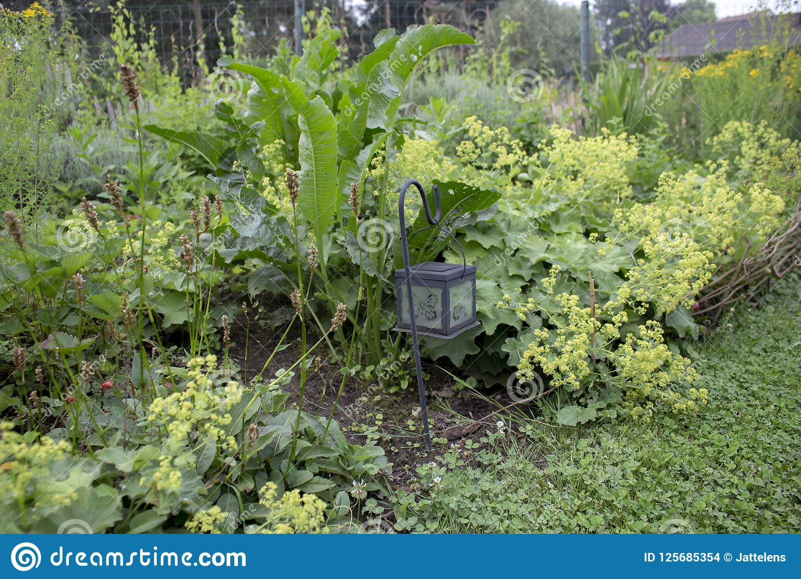 Herbaceous Border In Cottage Garden Stock Photo Image Of Plants
