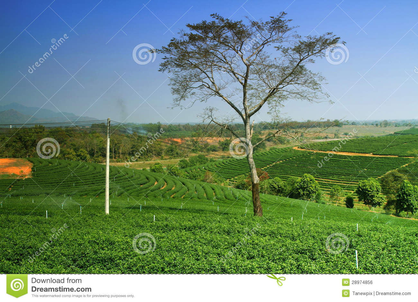 Herbaciana plantacja w średniogórzu