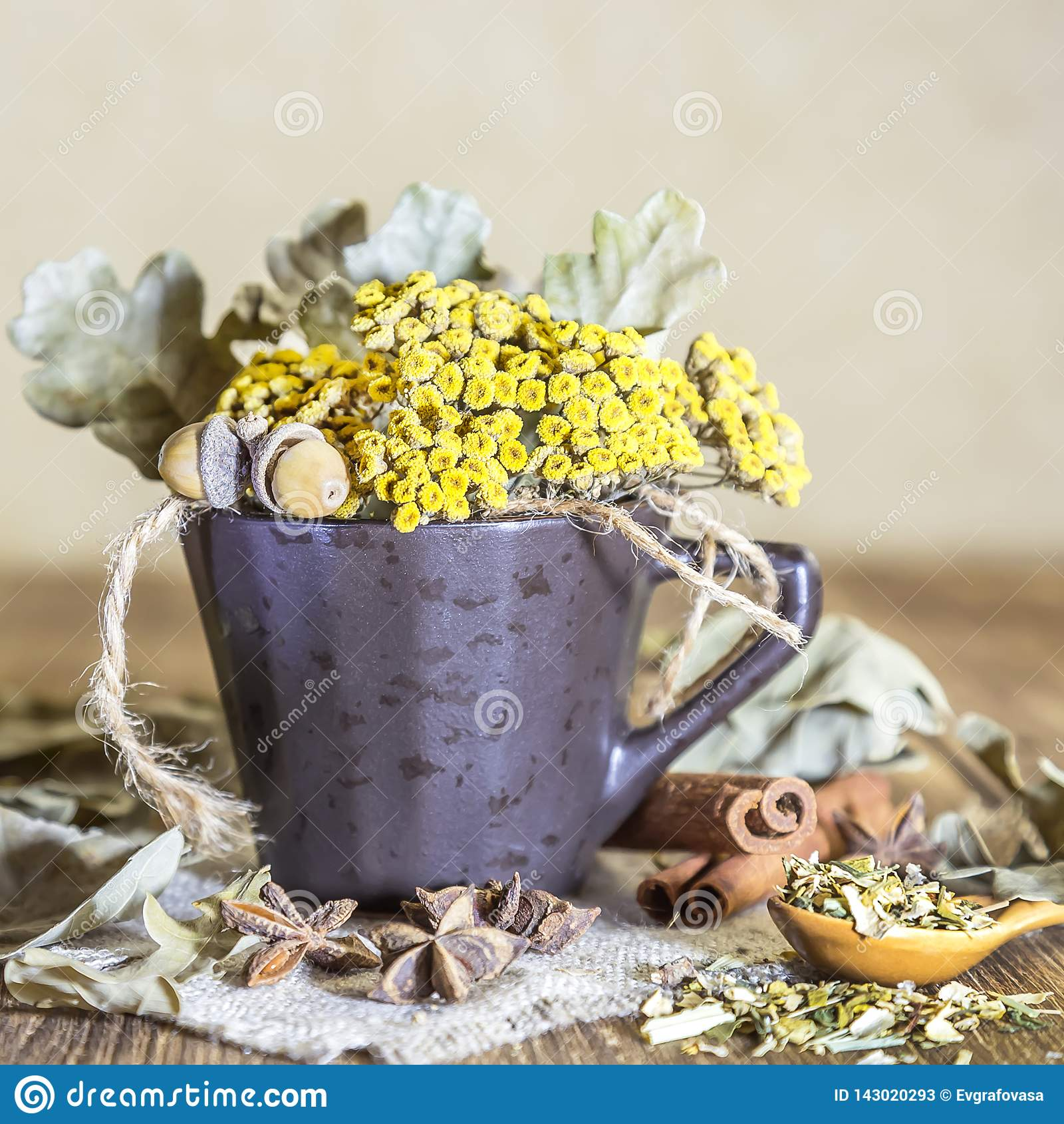 Herbal medicine, homeopathy, the collection of medicinal herbs for tea and medicines. Dried tansy flowers and oak leaves in a cup