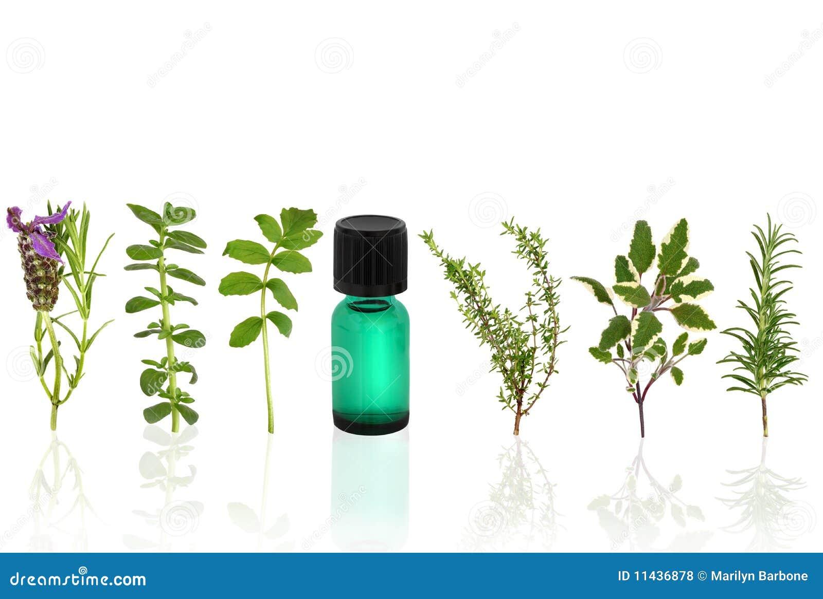 Herbal therapy akron ohio