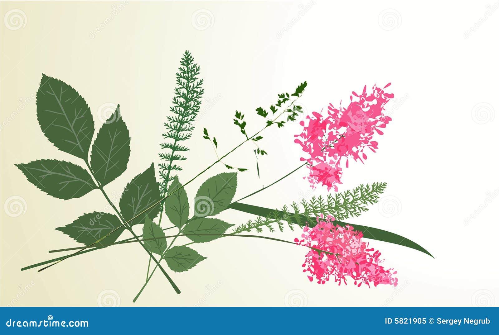 Herbarium bloemen
