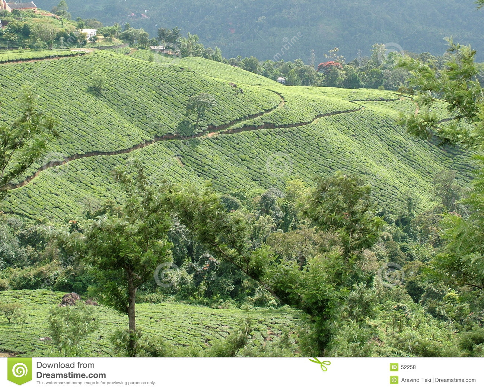 Herbata ogrodowa