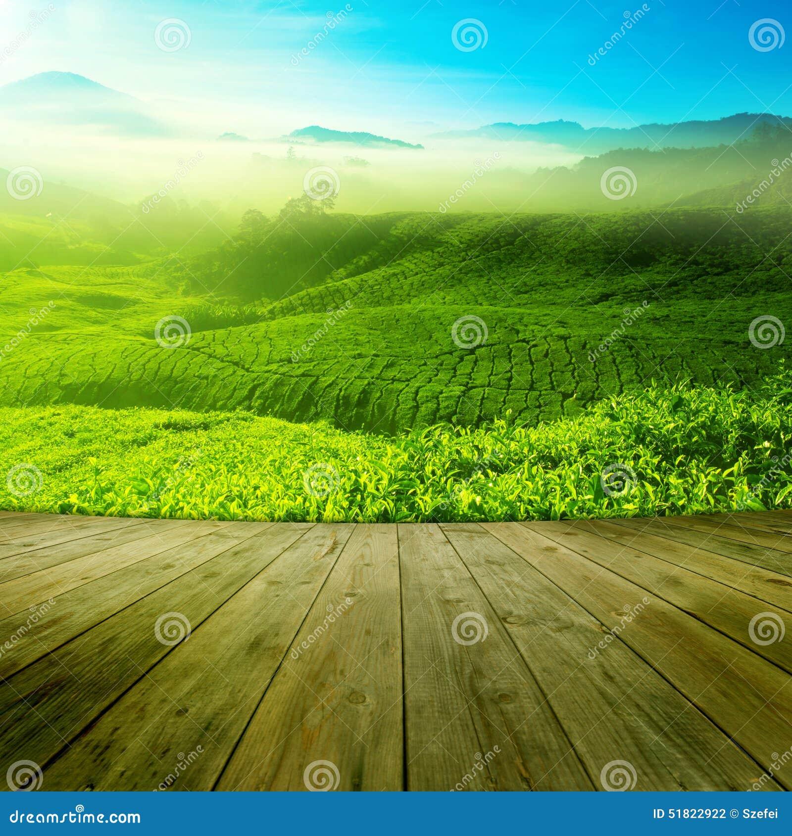 Herbaty pole