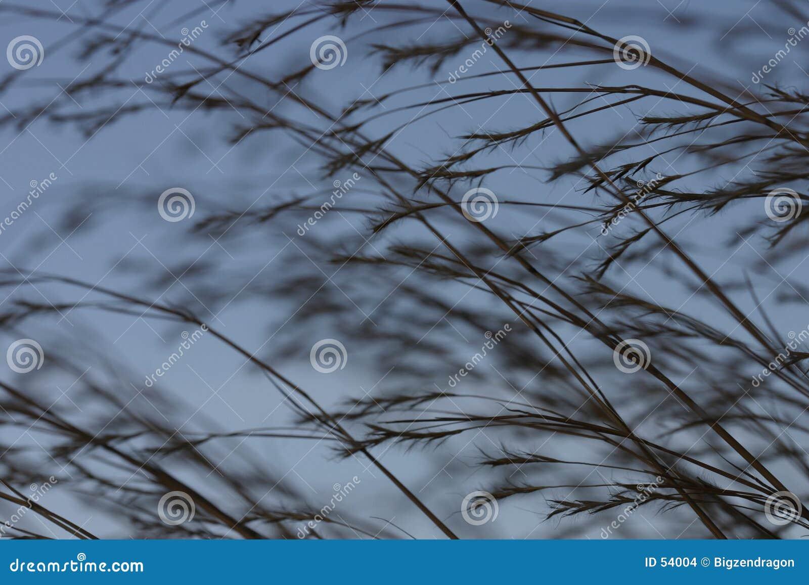 Download Herbe 2 de Praire photo stock. Image du graine, blé, centrale - 54004