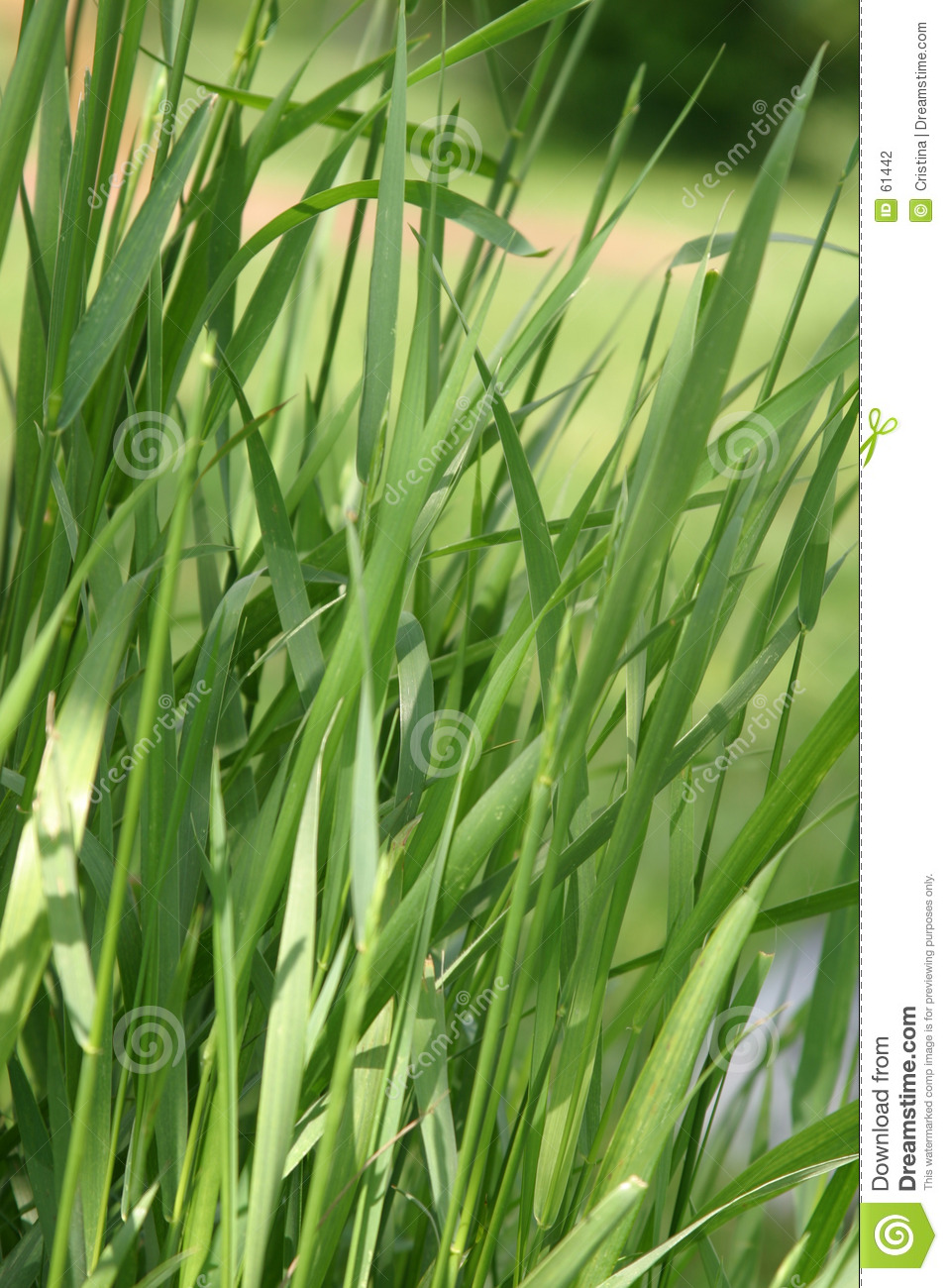 Download Herbe photo stock. Image du flore, stationnement, lame, sauvage - 61442