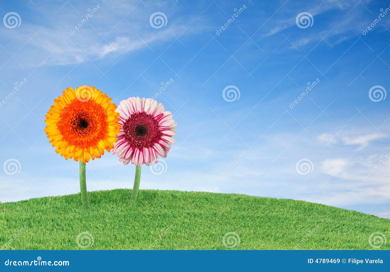 Herbe avec des fleurs
