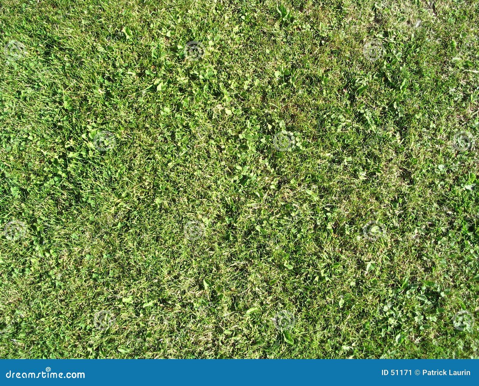 Download Herbe d'été image stock. Image du vert, nature, pelouse - 51171