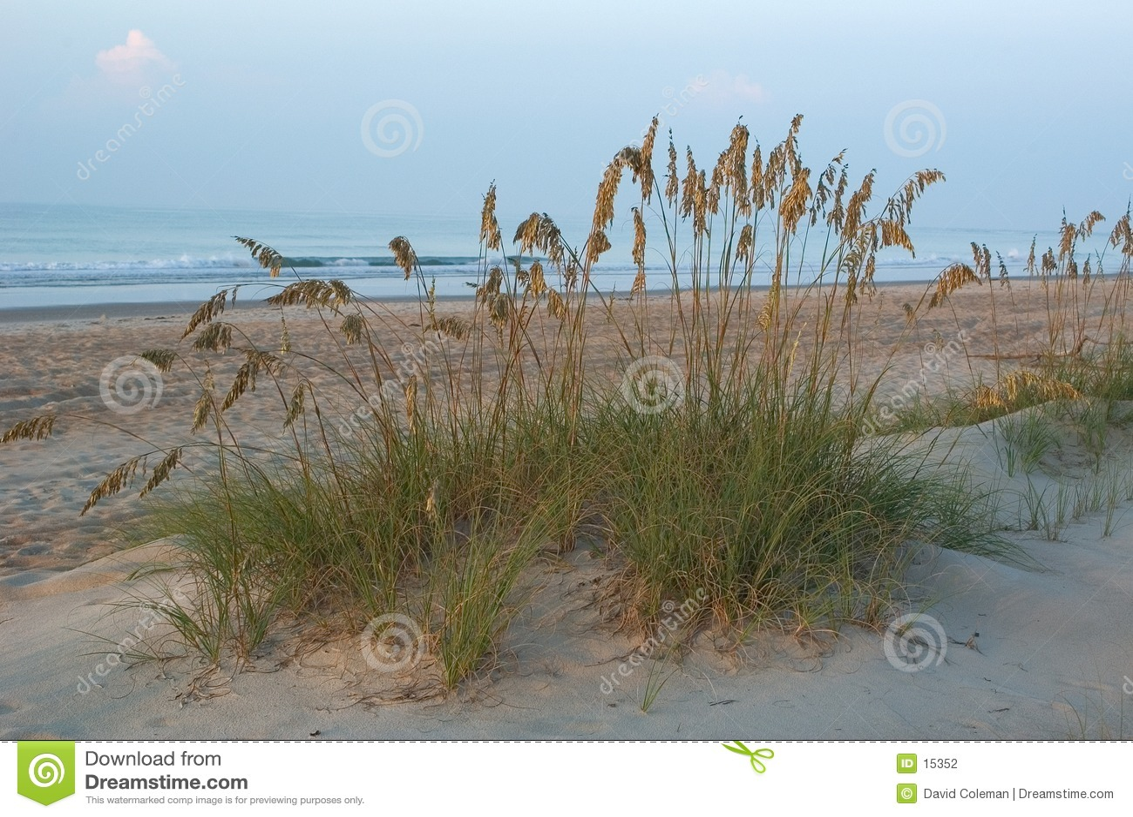 Herbe dans les dunes