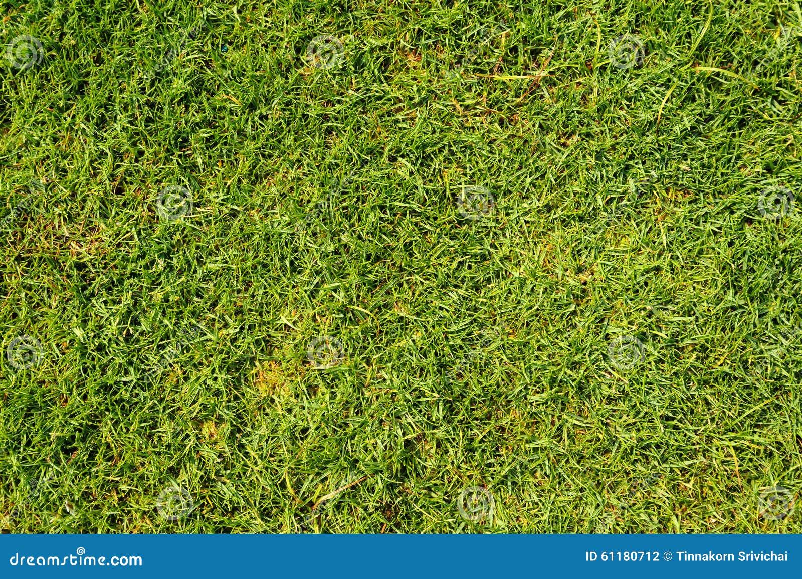 Herbe de pelouse dans le terrain de football photo stock for Prix de pelouse