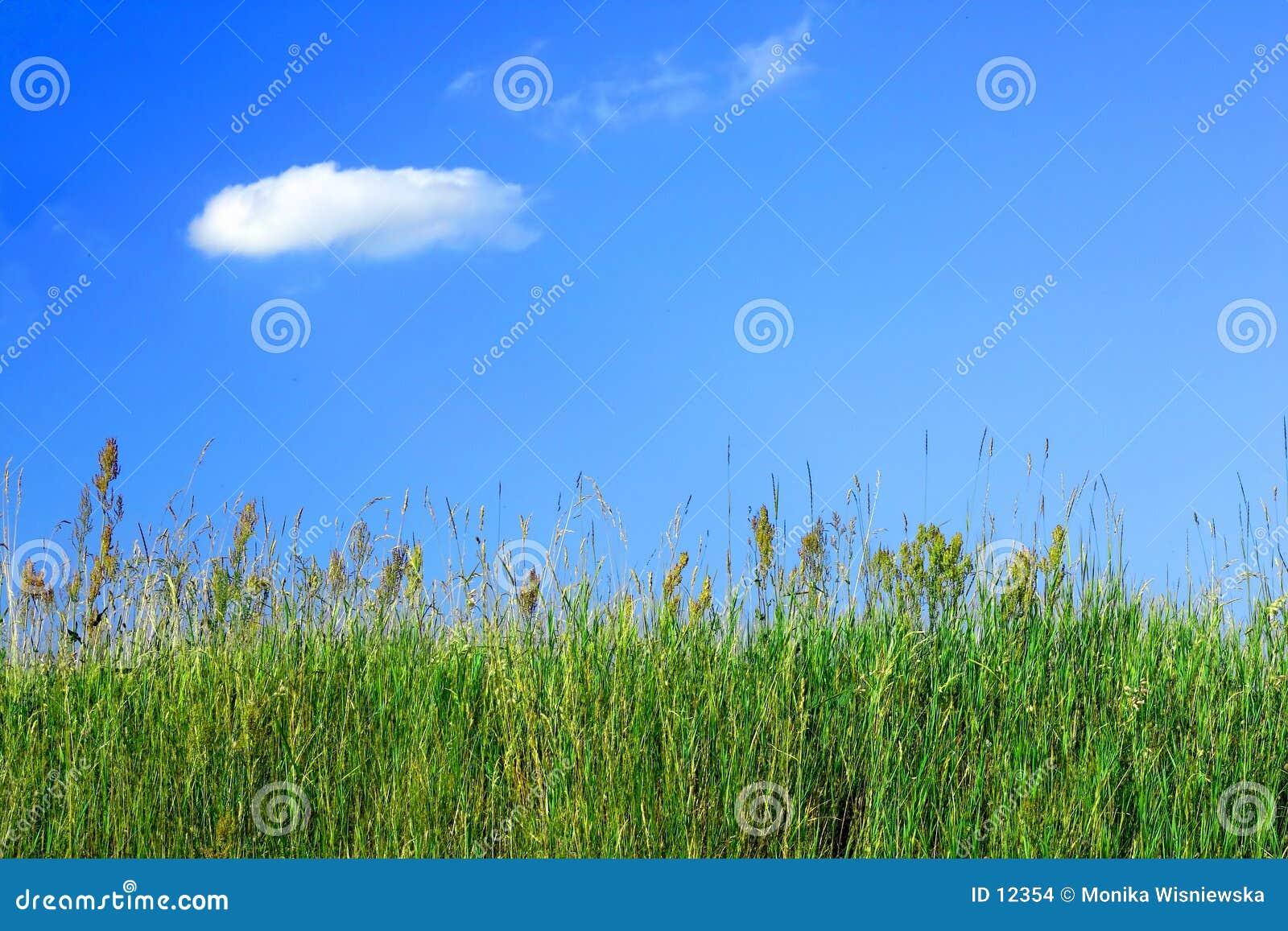 Herbe de pré et un ciel bleu