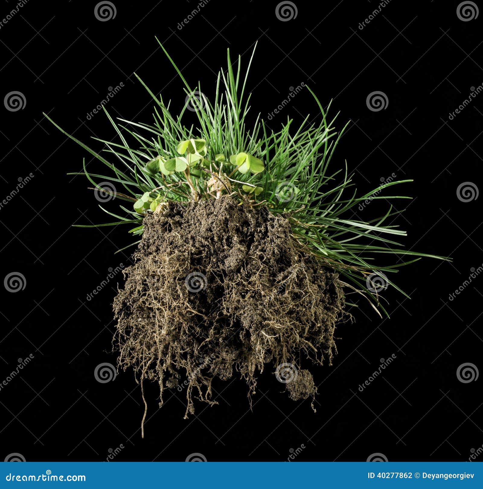 Herbe et terre de gazon