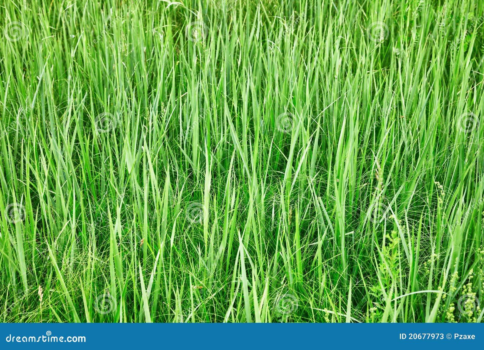 Herbe grande verte fond naturel image stock image for Desherbant naturel grande surface