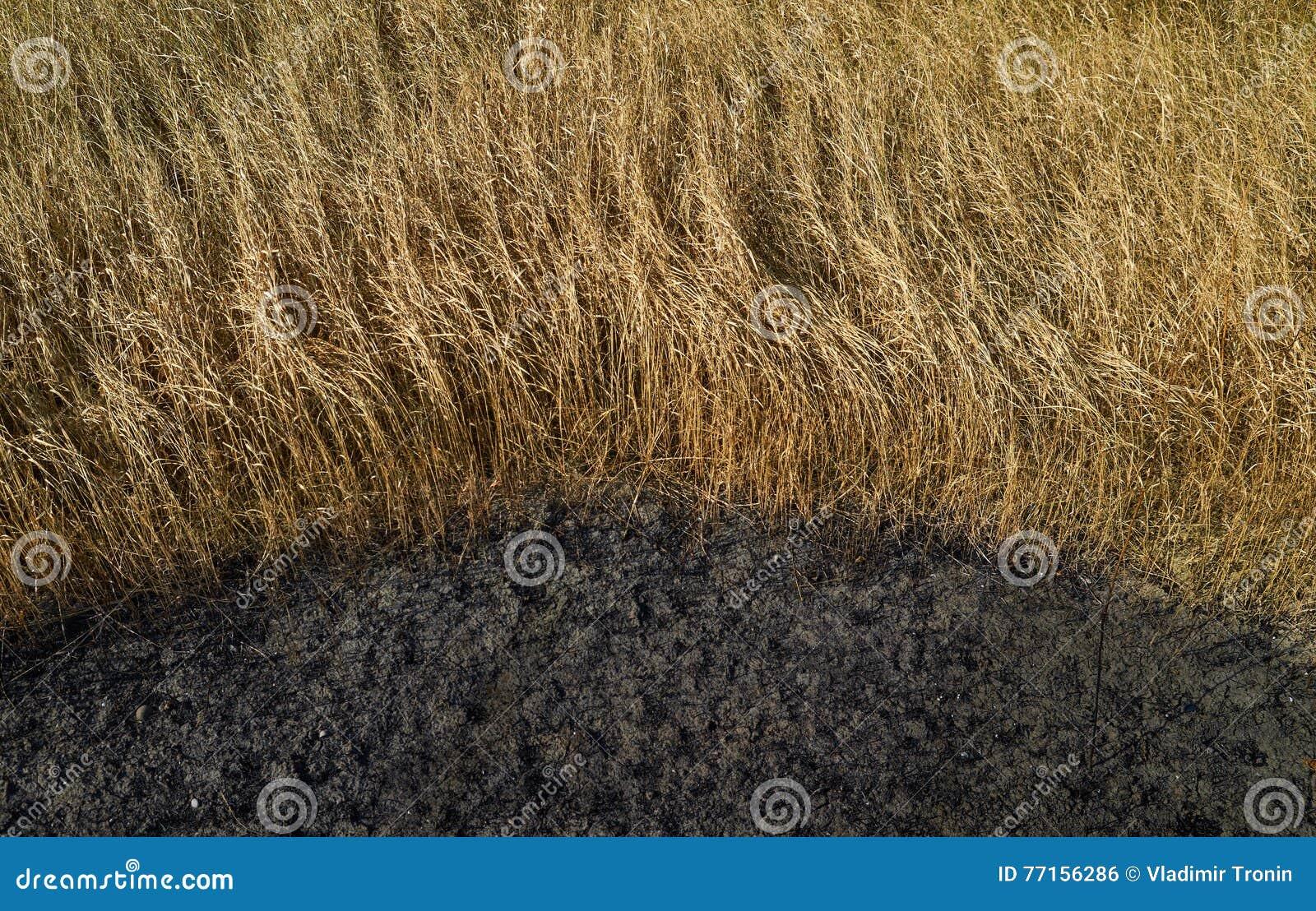 Herbe sèche et terre brûlée