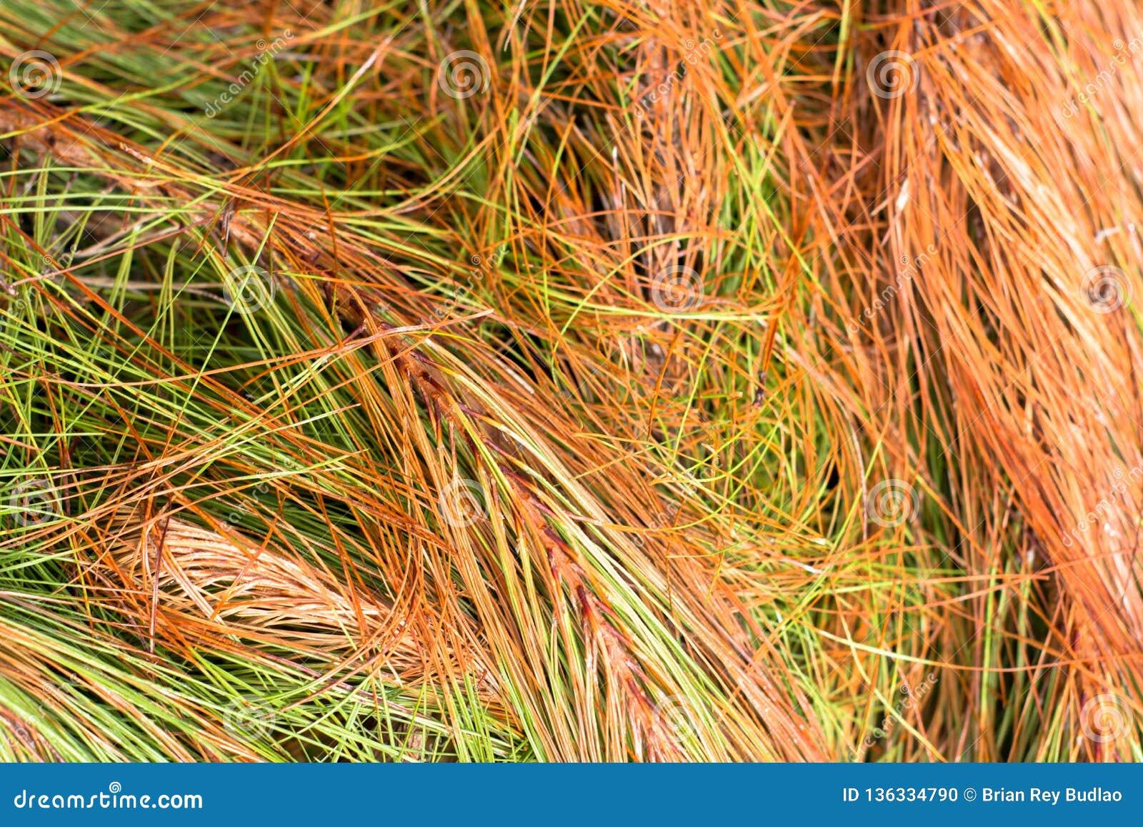 Herbe sauvage colorée dans la montagne